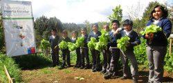 Cultivo de lechugas invernadero Colegio Misión San Juan de la Costa 2015