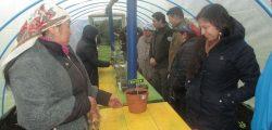 Cultivo lawen en Chilkatuwe ruca Termas de Puyehue 2018