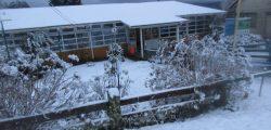 Nieve en Escuela Termas Puyehue 24 junio 2019