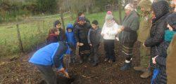 Plantando aliwen en Escuela Termas de Puyehue 2018