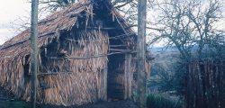 Ruka de doña Rosalba en Pichilafkenmapu