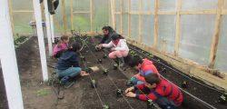 Sembrando en invernadero Escuela Termas de Puyehue