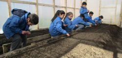 Trabajando en invernadero Escuela Ter,as de Puyehue