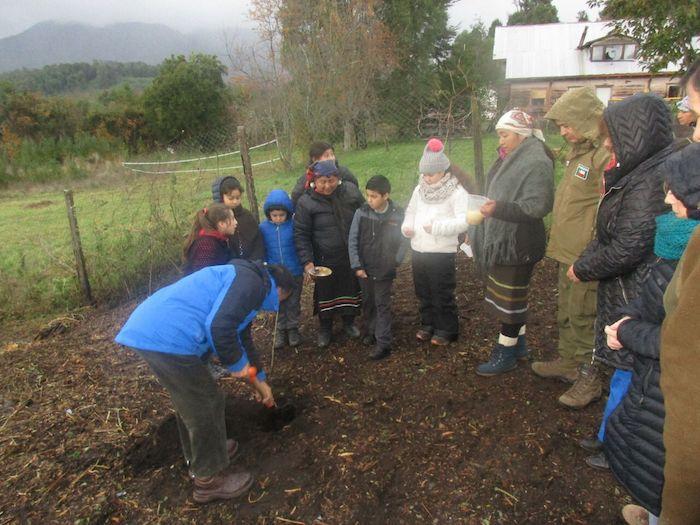 Plantando aliwen